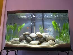 aquarium decorations aquarium decorations trellischicago