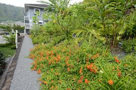 native plants landscaping landscaping hawaii 9 drop dead gorgeous features total