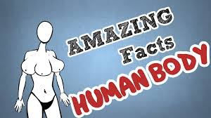 human facts hd m