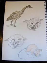animals sketch book