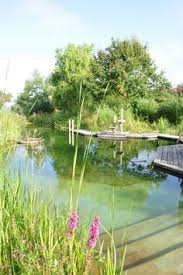 Natural Backyard Pools by A Step By Step Guide To Building A Natural Swimming Pool