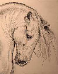 best 25 horse head drawing ideas on pinterest drawings of