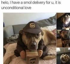 Best Dog Memes - the 100 best dog memes ever dog memes memes and dog