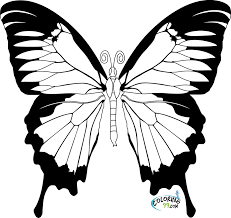 7 best images of butterflies coloring book printable pages for