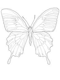 click to see printable version of ulysses butterfly coloring page
