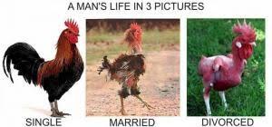Rooster Jokes Meme - rooster jokes kappit