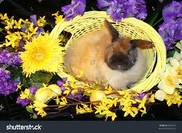 fuzzy easter adorable fuzzy easter bunny basket surrounded stock photo 2854279