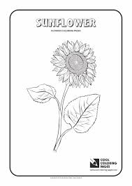 sunflower coloring page cool coloring pages
