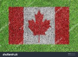 Painting A Flag Canada Flag Painting On Green Grass Stock Illustration 93565285