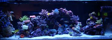 t5 bulb color combo the reef tank
