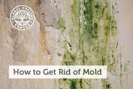 how to get rid of mold 15 tips homeowners should know