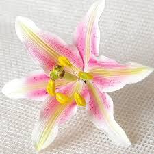 Star Gazer Lily Stargazer Lily U2013 Caljavaonline