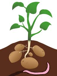 Couch Potato Clipart Potato Clipart Free Download Clip Art Free Clip Art On