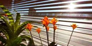 How To Clean Greasy Blinds How To Clean Dirt And Grime From Mini Blinds Living Areas