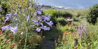 Summer Garden Ideas - devonshire garden is the perfect example of how to do colourful