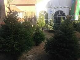 Family Pet And Garden Center - rhs advise choosing a christmas tree is like picking a pet