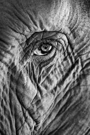 no one ever thought about the elephant u0027s eye or got close to it