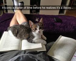 Funny Cat Meme - top 20 funniest cat memes tail threads
