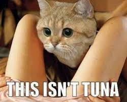 Tuna Sub Meme - this isn t tuna humorkitty funny cat pictures funny cat