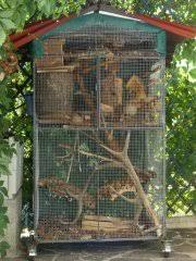 gabbie scoiattoli sopravvivenza di 10 tamia in una stessa gabbia