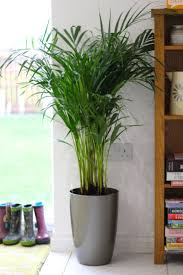plants for inside house theses 5 plants inside your house for