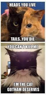 Batman Face Meme - batman cat cat memes awesome and funny picture mix pinterest