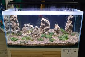 Aga Aquascape Aquascaping Live 2016 Large Tank Entries U0026 Results
