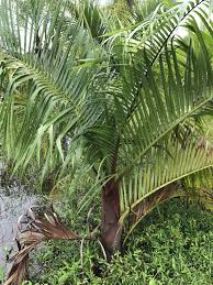 native florida plants for home landscapes home seabreeze nurseries inc palm trees tropical plants