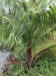 florida native plants for sale home seabreeze nurseries inc palm trees tropical plants