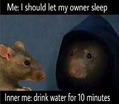Rat Meme - 12 hilarious rat memes from around the internet rats make me happy