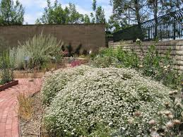 california native plant nurseries mother nature u0027s backyard a water wise garden plant of the month