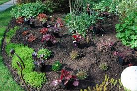 Landscaping Ideas Around Trees Recap 10 Thoughts On Successful Underplanting A Way To Garden