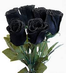 black roses for sale knumathise real black and roses images