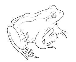 frog coloring free printable coloring pages