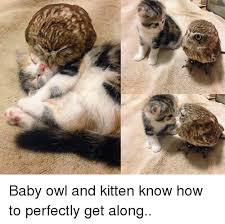 Owl Memes - 25 best memes about baby owl baby owl memes