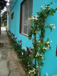Popular jardim | casa da maricota #AZ09
