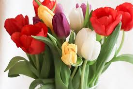 tulip bouquets tulip bouquet images pixabay free pictures