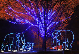National Zoo Lights by Pittsburgh Owl Scribe Christmas In D C Next Best Thing To