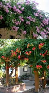 best 25 pergolas arbors and trellises ideas on pinterest small