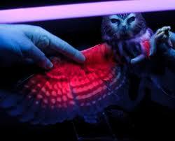 uv light for birds birdfellow birding services social networking and habitat