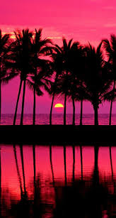 Palm Tree Wallpaper Pink Sunset With Palm Trees The Iphone Wallpapers