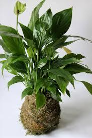100 flowering tropical house plants best 25 house plants