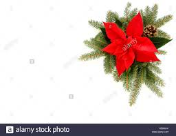 christmas border of poinsettia fir tree branches and pine cone
