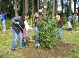 tree planting pruning removal beaverton or official website