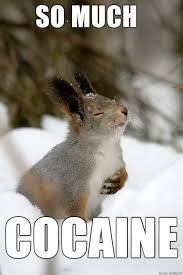 So Much Cocaine Meme - so much cocaine squirrel meme on imgur