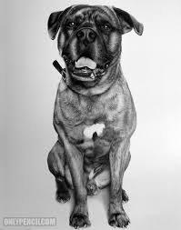 onlypencil com wildlife pencil drawings by lisandro peña