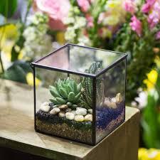 Moss Vase Filler Small Square Clear Glass Geometric Terrarium Box Succulent Fern