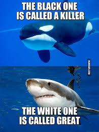 Shark Meme - black killer whale great white shark humoar com