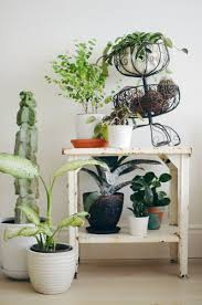 plant most common house plants fearsome names of different