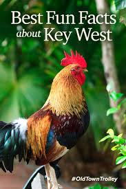 Homeaway Key West by 271 Best Key West Florida Images On Pinterest Key West Florida